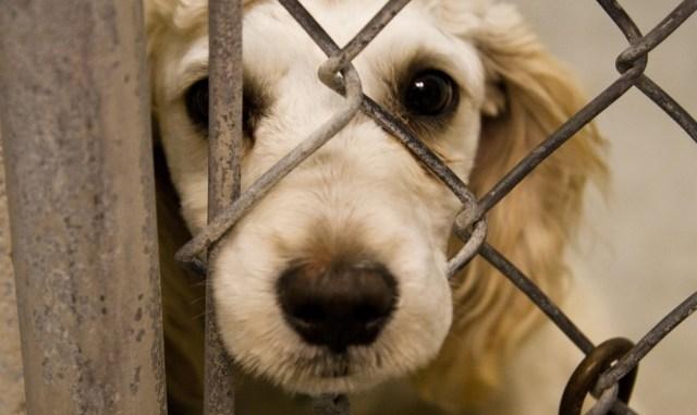 Cuáles son los signos de maltrato animal