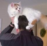 gato com 05