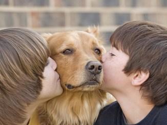 Adopción de mascotas responsable