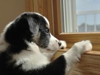 Atención con los perros encerrados porque padecen estrés