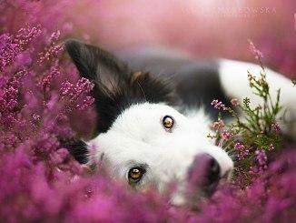 Los retratos más tiernos y artísticos de perros