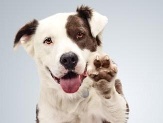 Cómo le cambia la vida a las mascotas cuando son adoptadas