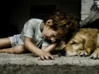 20 razones para animarte a tener un perro como mascota