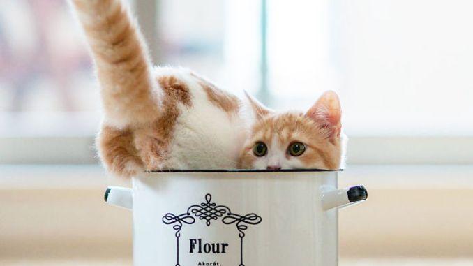 25 mascotas que se escondieron en una taza de té
