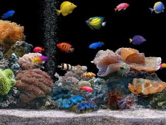 Cómo construir un acuario para peces tropicales de agua dulce