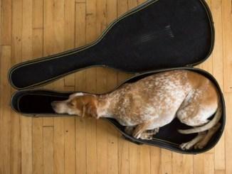 30 imágenes de perros con malos hábitos