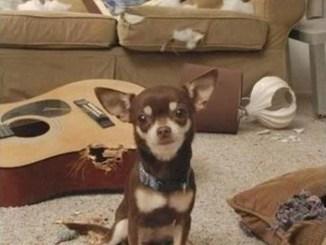 Los 15 perros más traviesos de la historia