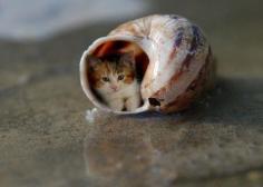 fotos gatos graciosos