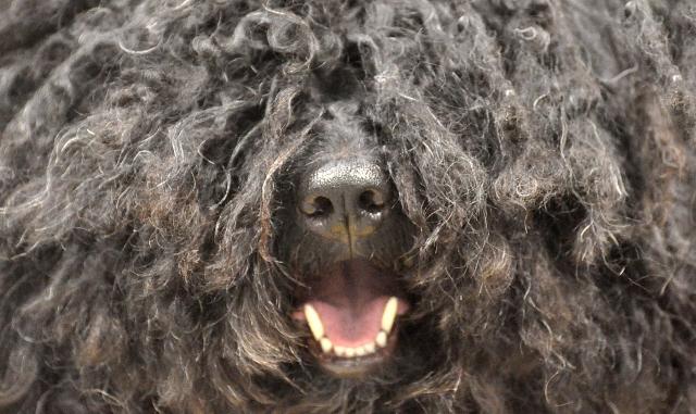 20 fotografías de cachorros peludos