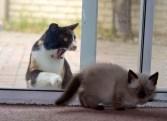 20 gatos desesperados por entrar a casa