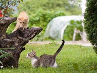Consejos básicos para criar a tu Gato Cachorro