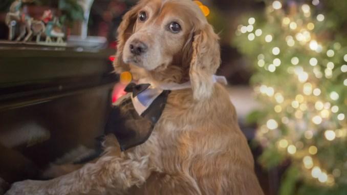 10 trucos para criar a tu perro sin sufrir en el intento (Parte II)
