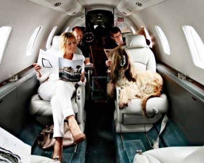 Permitirán viajar con perros y gatos en cabina