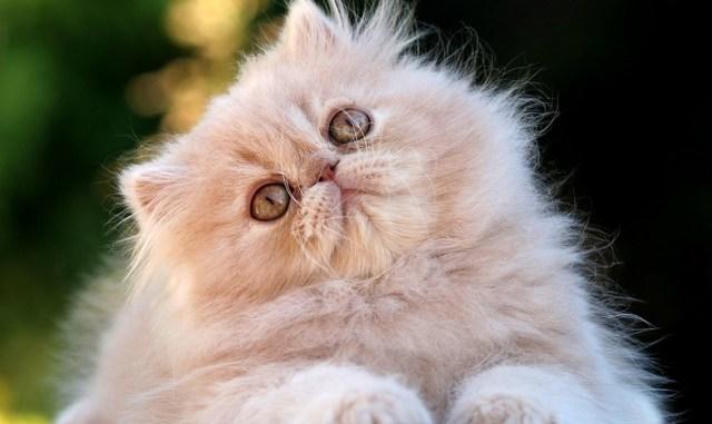 Tres preguntas que te hacías sobre tu gato y no tenían respuesta