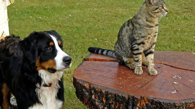 Es posible lograr una buena convivencia entre perros y gatos