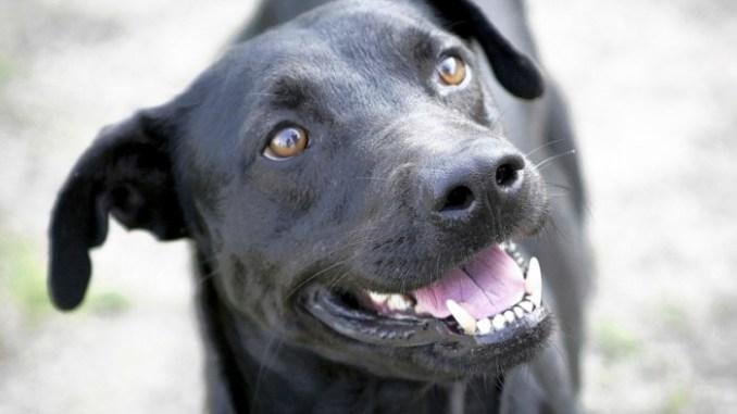 Cómo obtener la atención de tus mascotas a la hora de tomar una fotografía