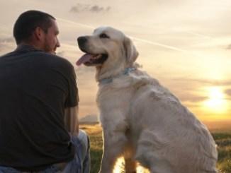 perro te ayuda a combatir la soledad