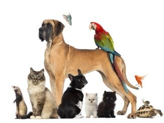 Las mascotas y los signos del zodíaco