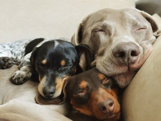 Cuidados periódicos que debe recibir tu mascota
