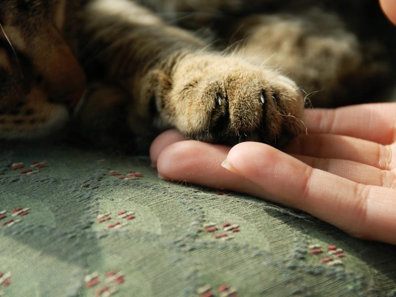 Cuidados indispensables para un gato - Cuidados gato 1 mes ...