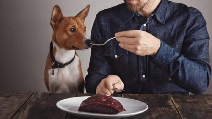 Alimentos que puedes compartir con tu perro