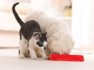 Cómo elegir correctamente la comida para tu mascota