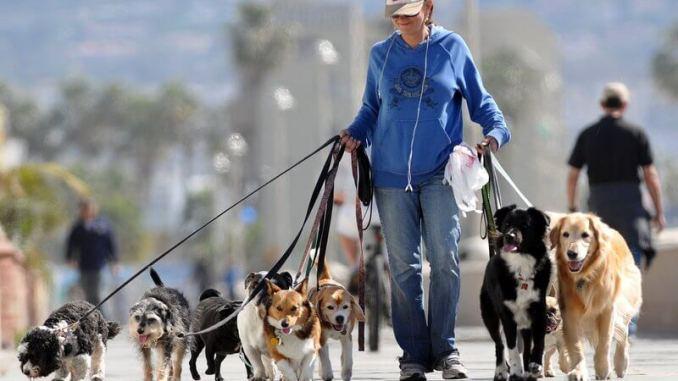 Cualidades de un buen paseador de perros