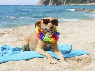 Consejos para salir de vacaciones con la mascota