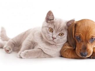 las mascotas domésticas elegidas por los antiguos egipcios