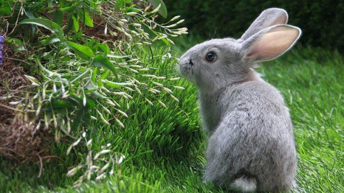 Cuidados necesarios de un conejo doméstico