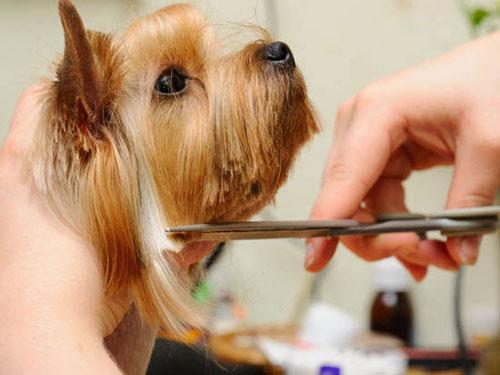 Cuidados de los perros de pelo largo