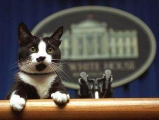 20 de febrero día internacional del gato