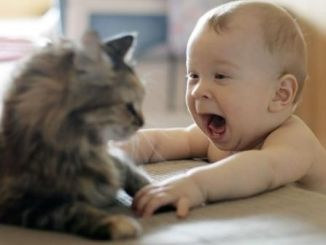 Cómo Enseñar a mi Hijo a Cuidar su Mascota