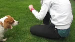 Errores al llevar tu Perro al Parque
