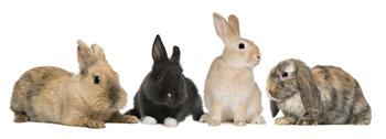 Principales Razas de Conejos y sus Características