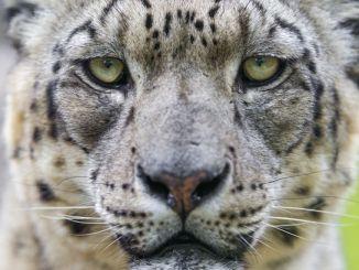 Animales que Están en Extinción en México