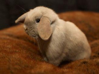 Guía para el Cuidado de tu Conejo