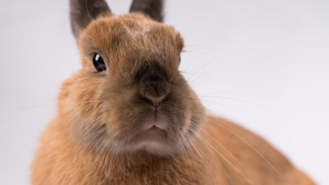 Cuanto Vive un Conejo Doméstico