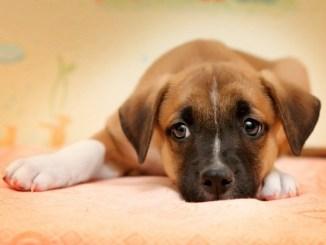 Las Causas de la Diarrea en Perros