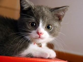 Frases Bellas Sobre Gatos