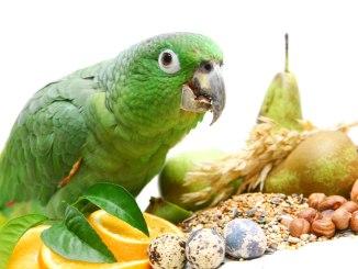 Alimentos Peligrosos para Loros