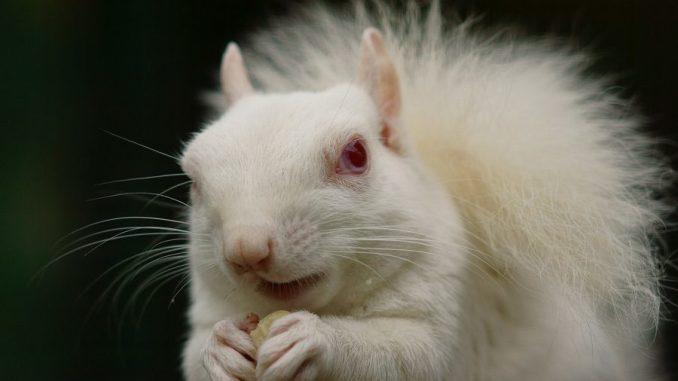 Información Sobre los Animales Albinos