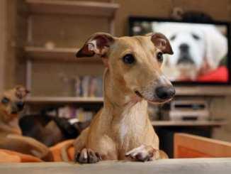 Los Perros Pueden Ver Tv