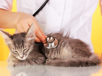 Algunos tips para darte cuenta si tu gato padece cáncer