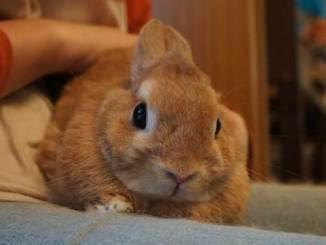 Puedo Bañar a mi Conejo