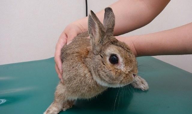Enfermedades más comunes que puede contraer tu conejo
