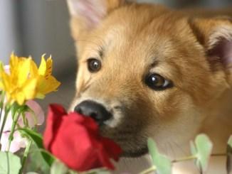 Lista de Plantas Tóxicas para Perros