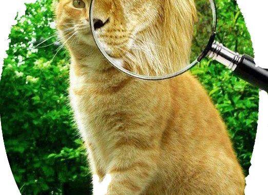 Origen y Evolución del Gato Doméstico