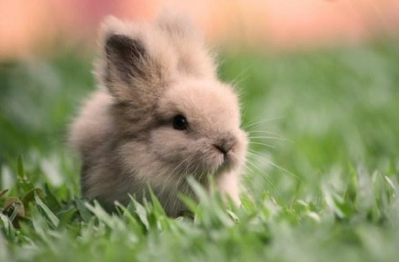 Enfermedades de la Piel del Conejo