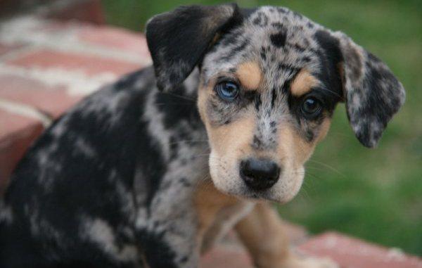 Las Razas más Raras de Perros del Mundo
